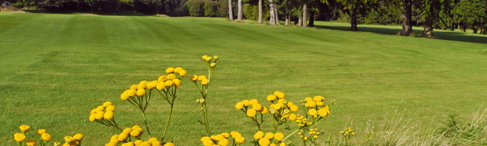 Fairway Blumen